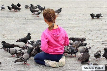 Taubenfüttern in Bad Honnef verboten